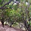 🍋🍊On vous emmène avec nous?🍋 Une visite vitaminée s'impose en cette magnifique saison des #agrumes  #citron🍋 #citronnier #mentonfrance🇫🇷